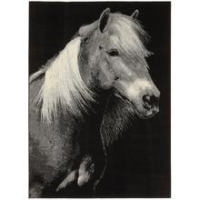 Tapis Cavallo 120 x 170 cm