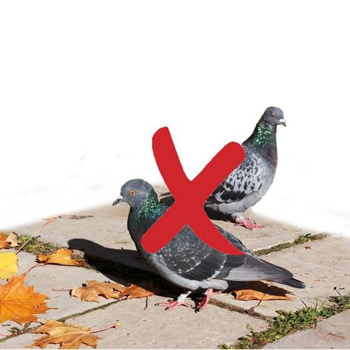 Répulsif pour oiseaux